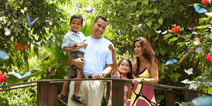 aruba-butterfly-garden